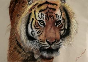 """Tiger""by Breanna Fowler"