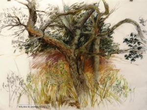 Island Tree II by Pamela Toll