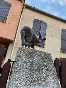 """""""French Cat""""by Nadia Lusignan"""