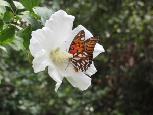 """""""Butterfly in Bloom"""" by Marva Moss"""