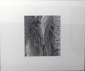 Pelican Feathers II by Guy Pushée
