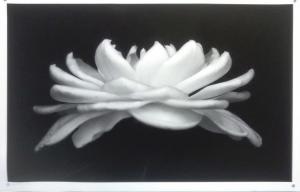 Tropical Magnolia by Guy Pushée
