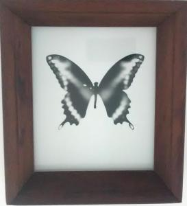 Butterfly by Melissa Wilgis