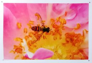 Resting Bee by Guy Pushée