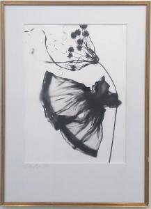 Windswept on White by Melissa Wilgis
